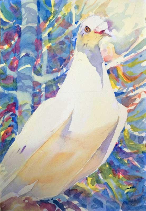 Pigeon Peace - watercolor, Jan Hart