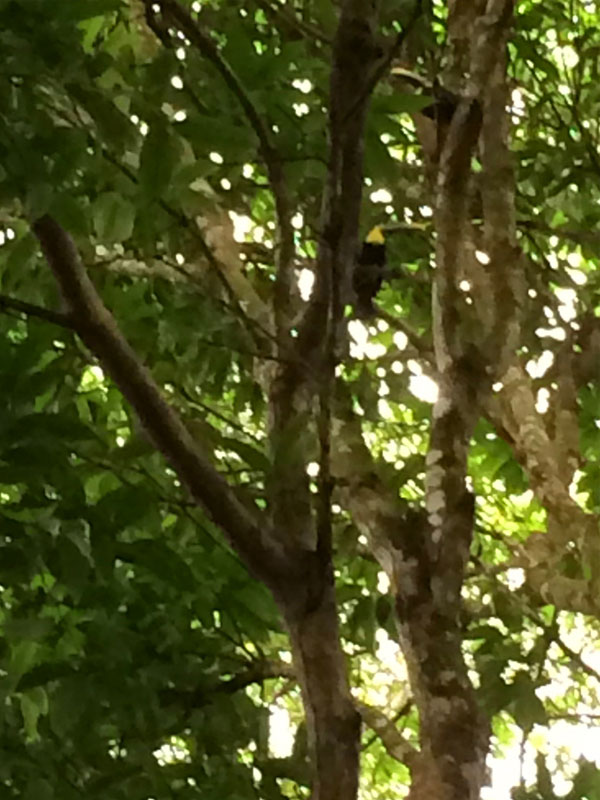 Toucans in the Tree - photo