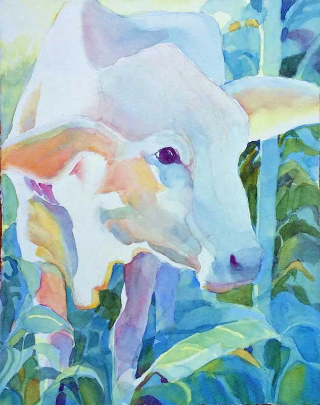Gentle White Cow - watercolor, Jan Hart, 2015