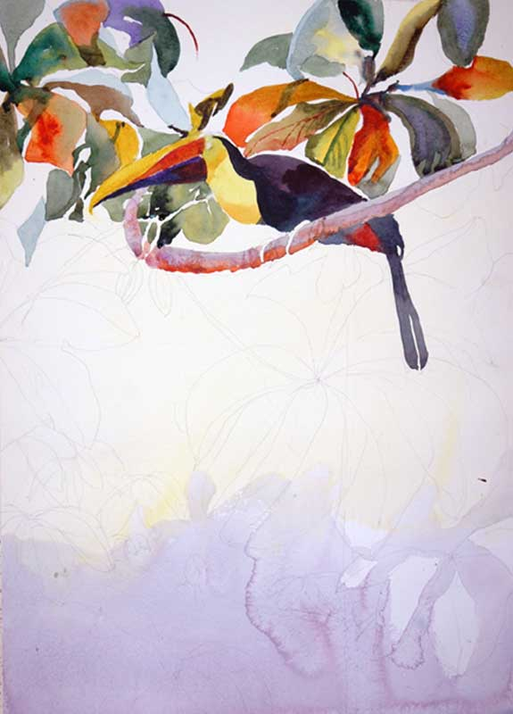 Step 2, Toucan Fly