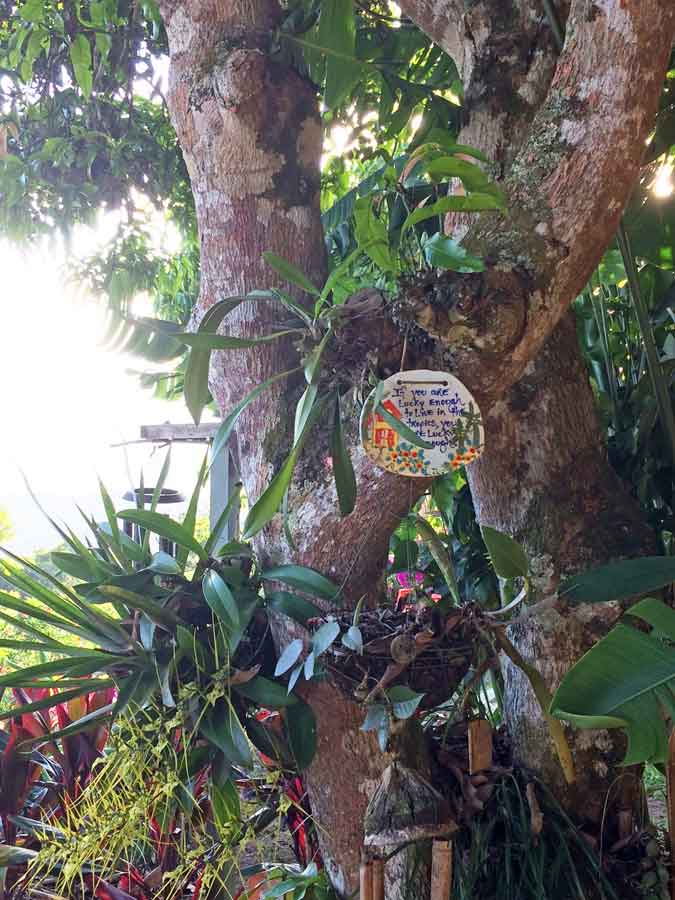 Mango Tree photo